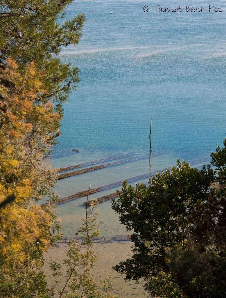 Cap Ferret, Mimosa, Bassin d'Arcachon, par à huitre, taussat beach pictures
