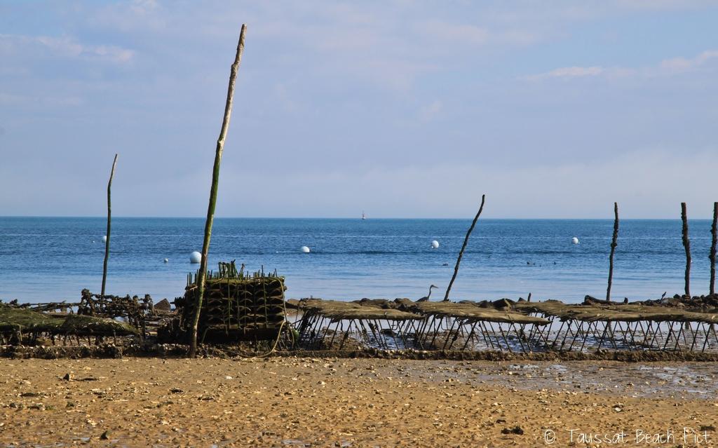 Cap Ferret parc à huitres passes plage bassin arcachon