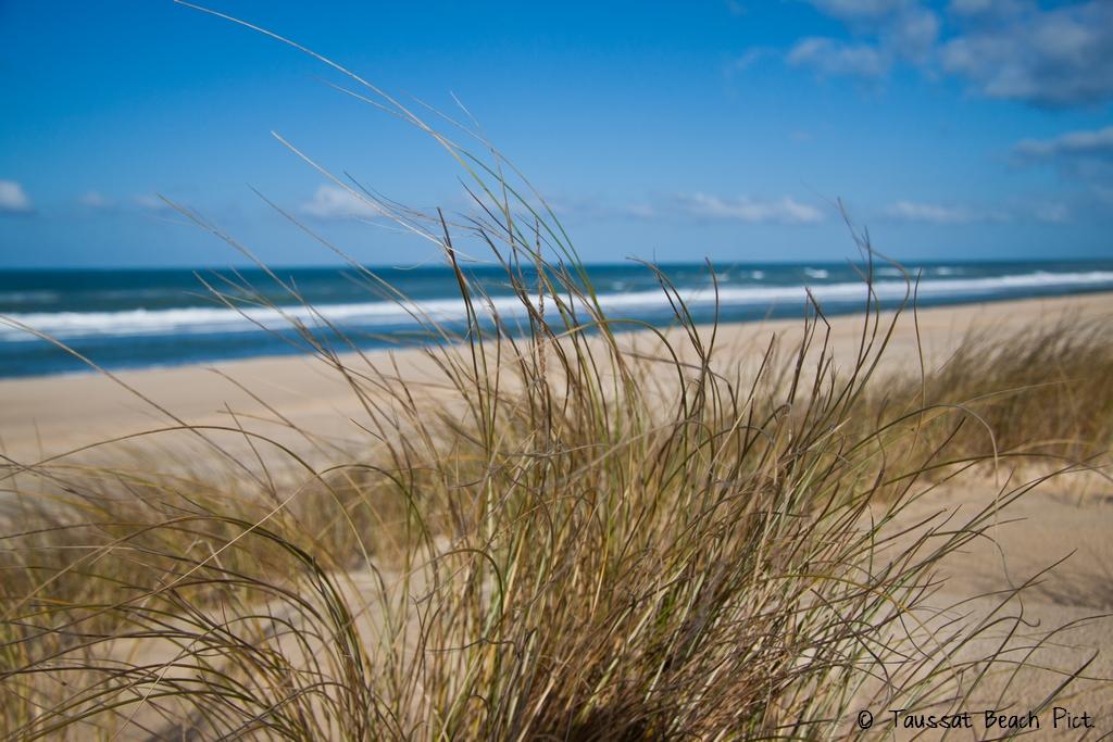 dunes sables plage océanes cap ferret sud ouest auqitaine grand crohot dune herbe