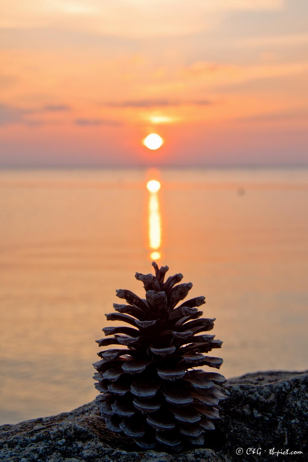 sunset pine cone