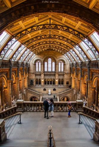 Musée d'histoire naturelle - Londres